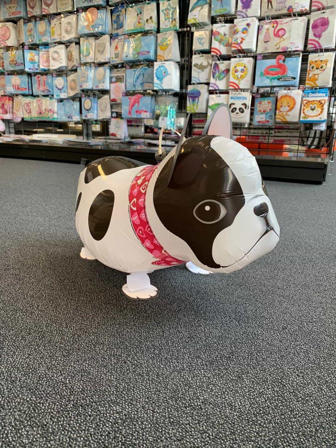 Boston Terrier Ballon €10 1